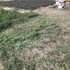 2月下旬の緑肥