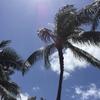 3歳子連れ家族旅行 in Hawaii 〜到着後はアラモアナでお買い物が鉄則~
