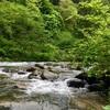 テンカラ釣行記:2017年5月中旬の片貝川支流にて、イワナとたらの芽と「試練と憧れ」