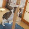 猫タワーのお直し