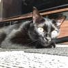我が家の愛猫の親バカ更新
