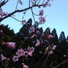 庭に咲く春の花々【熟女の日常】