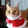 イケメンサンタクロースになりたい猫