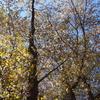 霊園風景 その52  「‥この春の 青空めざす 山桜」