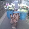 恵比寿で花売り『ロバのローザちゃん』と会えるのはいつ?どこから来てる?