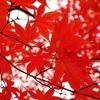 所沢航空公園へ紅葉を見に