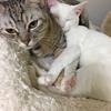 保護猫のムーアさん3度目の里親さんへ