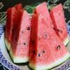 「佐久の季節便り」、「スイカ(西瓜)」食べ収め、「モモ(桃)」は盛りに…。