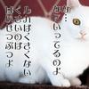 猫と脱臭機と感電の危機