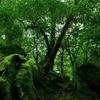 【無料/フリーBGM素材】静寂、ピアノ、森の記憶『 Memory of the Forest』アンビエント