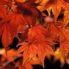 今まで行って良かった京都の紅葉スポット、個人的ランキング