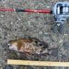 ホクシン前テトラ帯で穴釣り。サンマの干物でガシラ爆釣!
