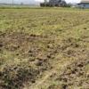 1.7反の田んぼを耕起しました。不耕起はそのまま…