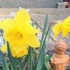 3月20日(月)春分の日の「日替り はこきび ランチ」メニューです。