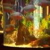 雨の日の水族館