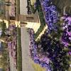 花の海の灯籠
