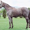 【東サラ】2021年度募集馬評価⑯ハイドバウンドの20
