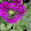 あふれるほどの希望の花