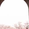 Snapshot ~『桜 2021』 #10