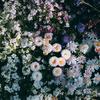 ガーデンピックでお庭を華やかに🌸~DIY~