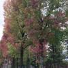 【フルーツむらはた】金沢の人気のフルーツパーラーの黒無花果パフェ