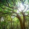 萩市の椿群生林へ