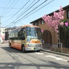 植えかえられた桜道の桜に思うこと(横浜市港南区)