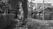 Snap #180 散歩道