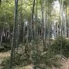 竹を切ってます