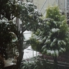 午前中は、雪!この時期の雪は珍しい?午後から雪はやみ曇り!