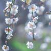 【春】雪国から戻ればどこだって春【札幌】【横浜】【青森】