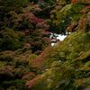 紅葉まだはやい高野山へ。コロナ後の高野山の情景。
