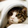猫の寒さ対策の絶対注意して欲しいポイント!毛の少ない猫は風邪も注意!
