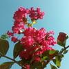 今日の庭の花