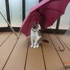 干す傘下おネコさま。