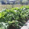 やかた菜園ニュース(9月29日)