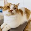 猫のトイレセミナーを受講して、トイレの見直しをおこないました。