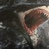 最近よくサメが夢に出てくるのだが