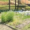 家庭菜園① 父の家庭菜園