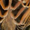 1111【カラスが沢山いろんな鳴き声】チンアナゴの日詐欺、寂しいコガモ、ヒドリガモの換羽、スズメの水浴び、ジョウビタキ、緑のカワセミ【 #今日撮り野鳥動画まとめ 】 #身近な生き物語