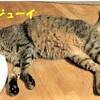 守るのは飼い主のあなたしかいないから(猫の熱中症)原因と応急処置と対策