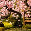 短期間で日本の借金返済の目処を立てて、経済を復興させる方法!