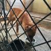 中標津で捕獲された母子犬を保護しました