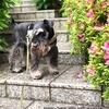 緊急事態宣言、45日目(5/22)愛犬のオチンチンをキレイにしてもらいに病院へ