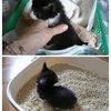 子猫を保護。。。