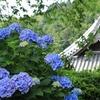 西国第二十番札所「京都西山 善峯寺」紫陽花 2019