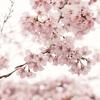 【お花見というのものは桜を見たり酒を飲んだりする事よりも桜が咲く前向きな季節を楽しむものだなと思う】
