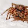 【イラスト】クモがもくもく這い出てはじめまして