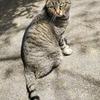 ◆山猫達(2018/4/8)