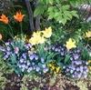 約束の花が咲いて